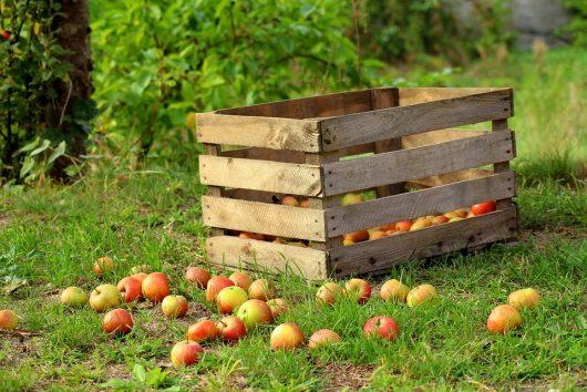 Raccolta frutta e verdura: cercasi personale in tutta Italia